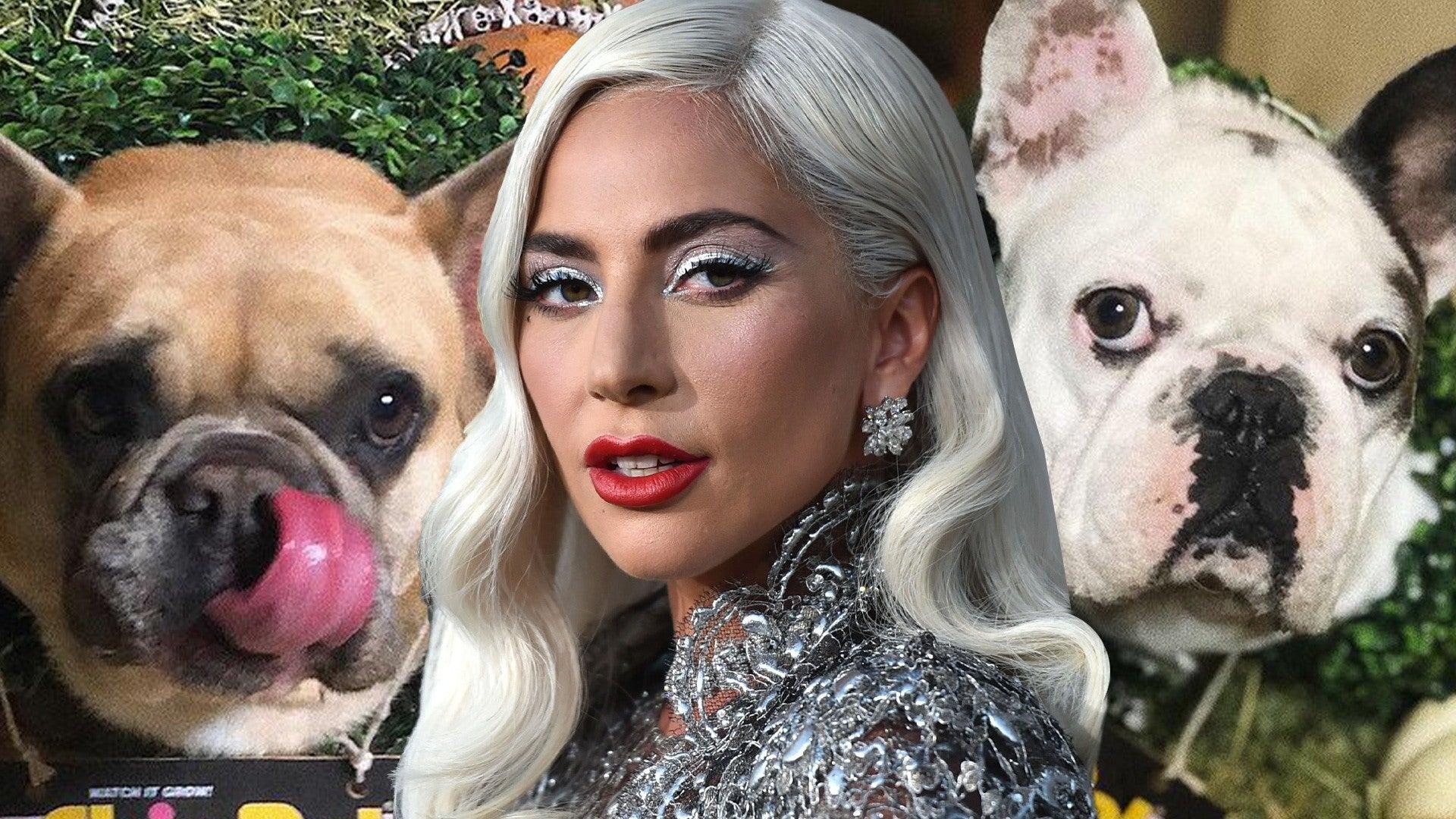 ليدي غاغا مستعدة لدفع نصف مليون دولار مكافأة المرأة التي أعادت كلبتيها