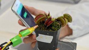 سنغافورة: تحويل النباتات إلى...روبوتات!