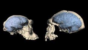 الدماغ البشري الحديث ظهر بعد مليون سنة مما كان يعتقد