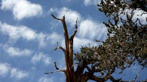 تأثيرات الضوضاء السلبية على الأشجار تدوم مدة طويلة بعد توقفها